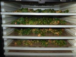 Kale chips dehydrate